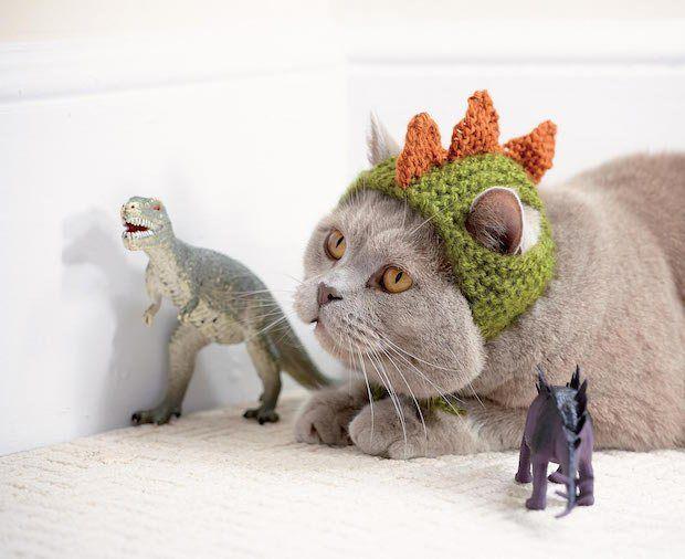 Cats In Hats Knit A Dinosaur Hat Or Crochet A Fox Hat For Your Kitty Make Cat Hat Pattern Crochet Cat Hat Crochet Cat