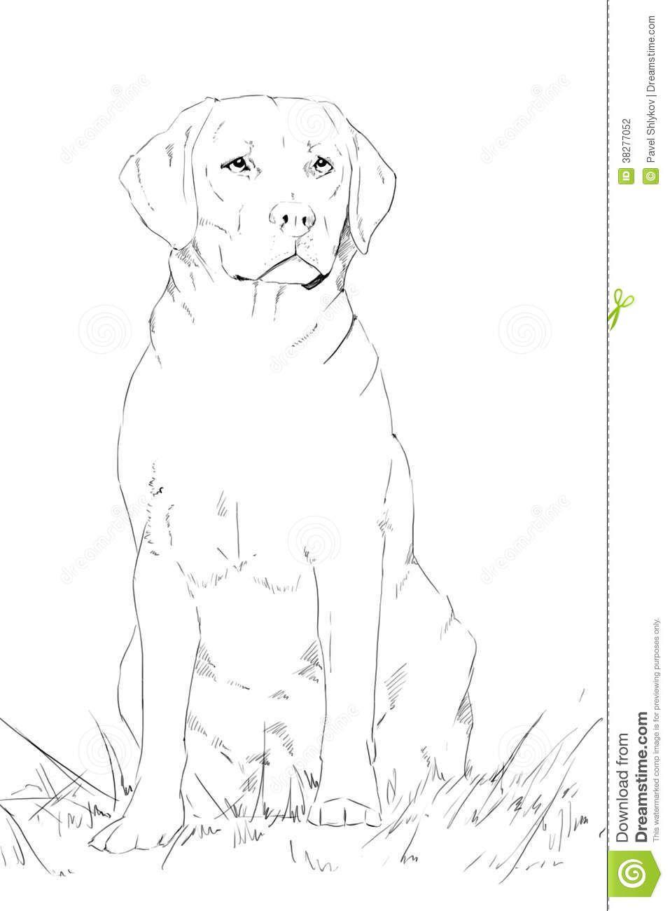 Dog Sitting Drawing Dog Sketch Sitting Dog Drawing Sketches