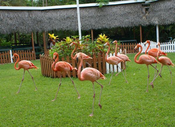921b16d4555394fcb40ac899bf7cac3d - Nassau Bahamas Ardastra Gardens And Zoo