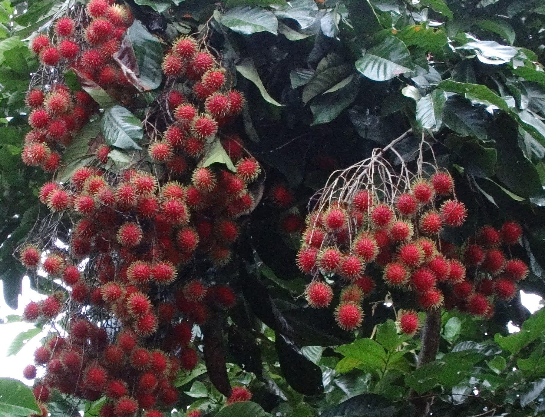 Pin On Plantas Frutales Para El Jardin