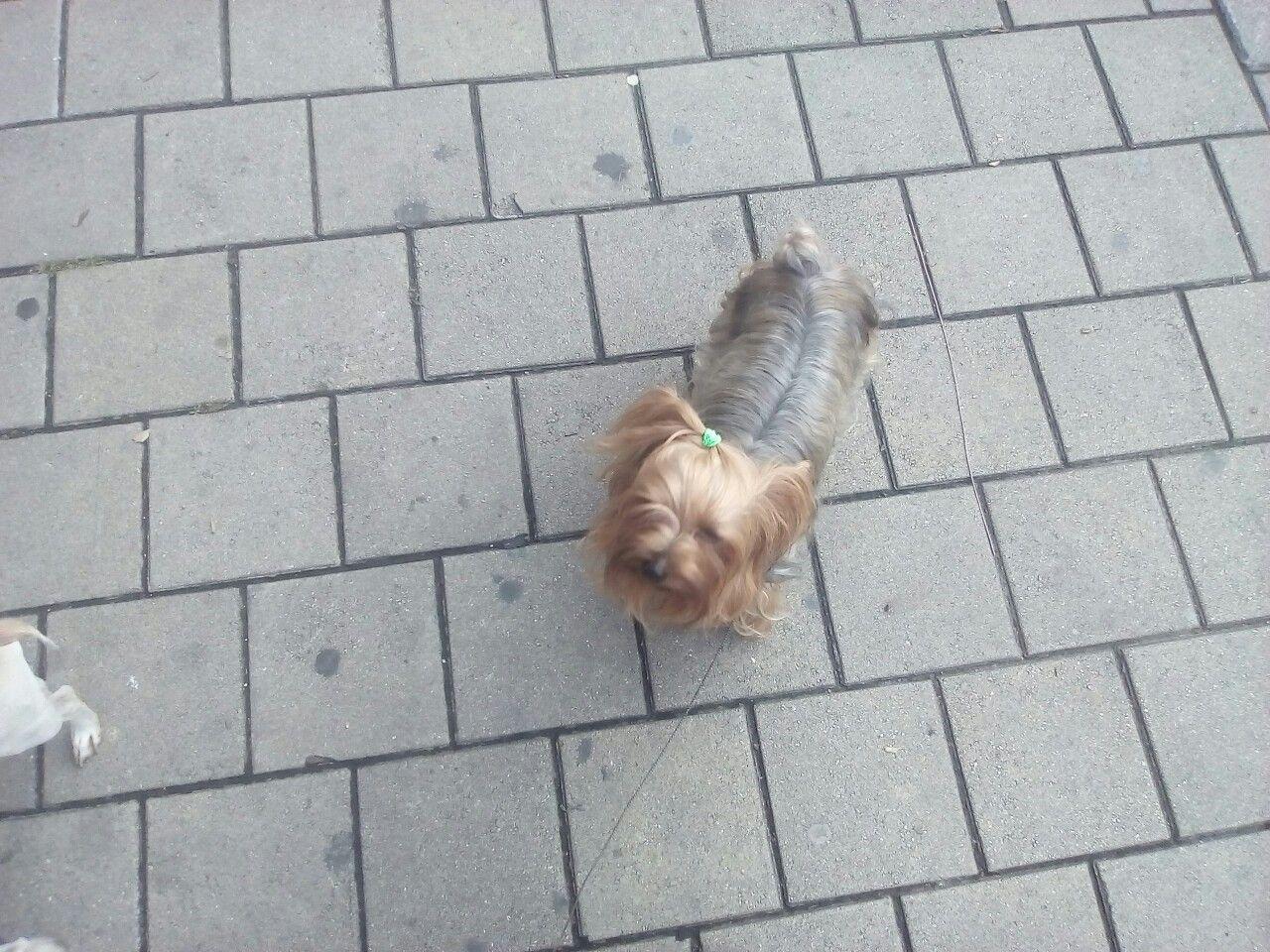 Imagen sobre Perros de Luky Speede en MOLLYWALKER PASEADOR