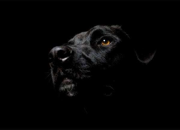 Stunning Dark Wallpapers For Your Desktop 2019 Black Labrador Dog Dog Wallpaper Black Dog