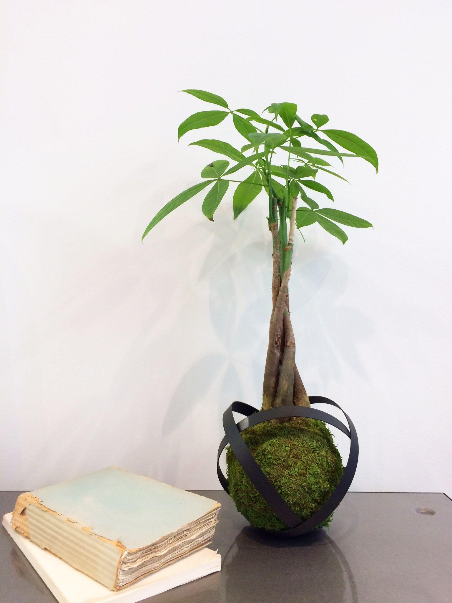 kokedama journal le kokedama art vegetal japonais s invite chez fleux