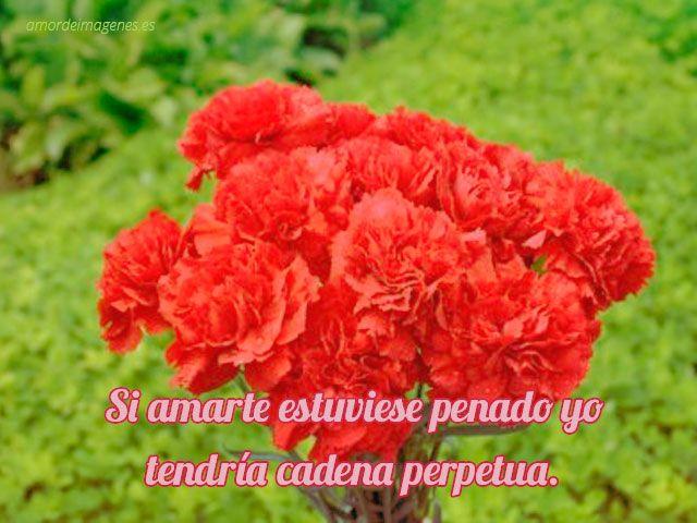 Claveles rojos Árboles, Arbustos, Plantas Y Flores Pinterest