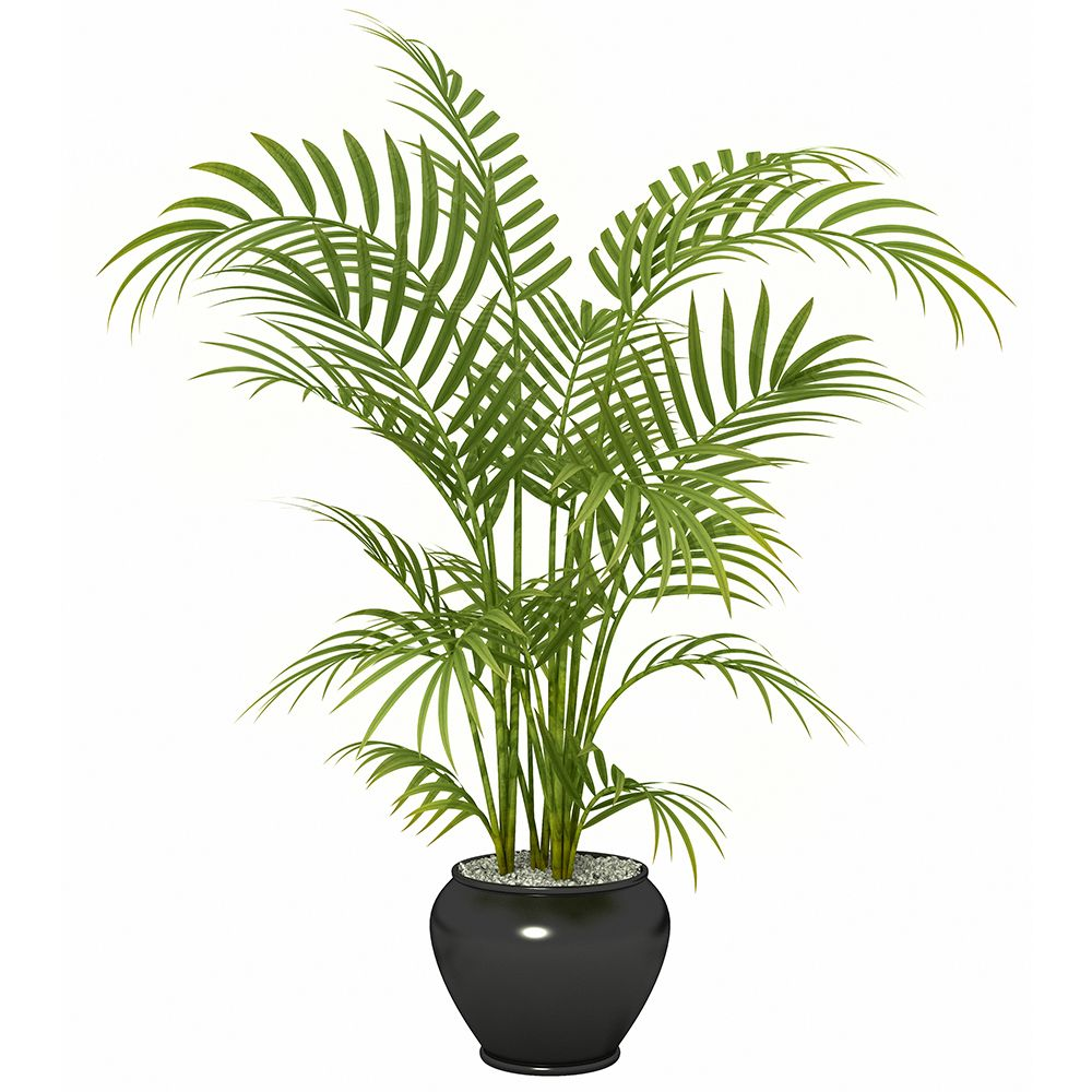 feng shui plants for office. Best Plants For A Healthy Office Feng Shui