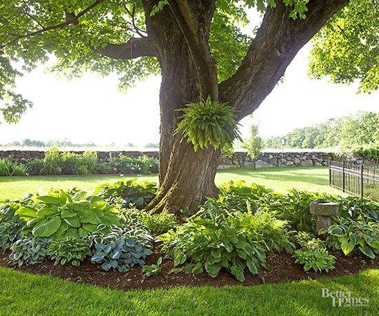 faire une rocaille sous un arbre magnifique 20 exemples video yard pinterest. Black Bedroom Furniture Sets. Home Design Ideas