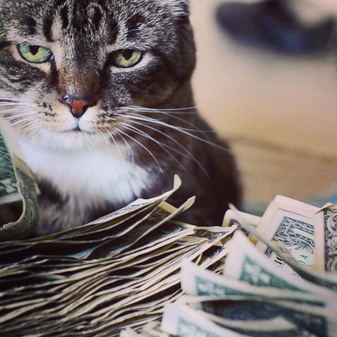Cashcats Biz Cats And Kittens Cats Kitten