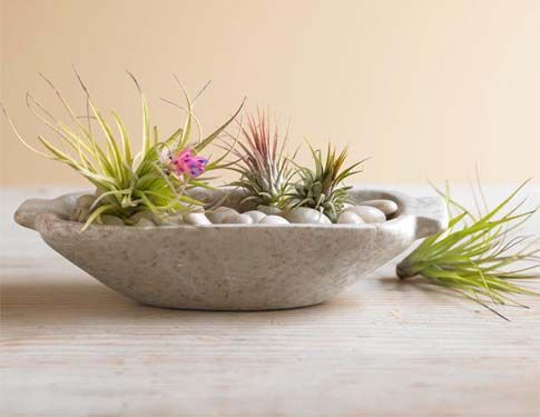 Love this little air plant arrangement... So easy to care for.