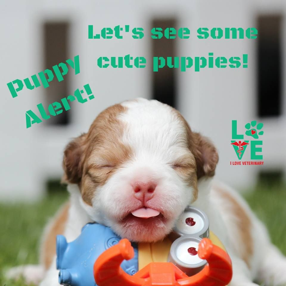 Let S See Some Adorable Puppies This Monday 3 Smartest Dog Breeds Puppies Baby Dogs