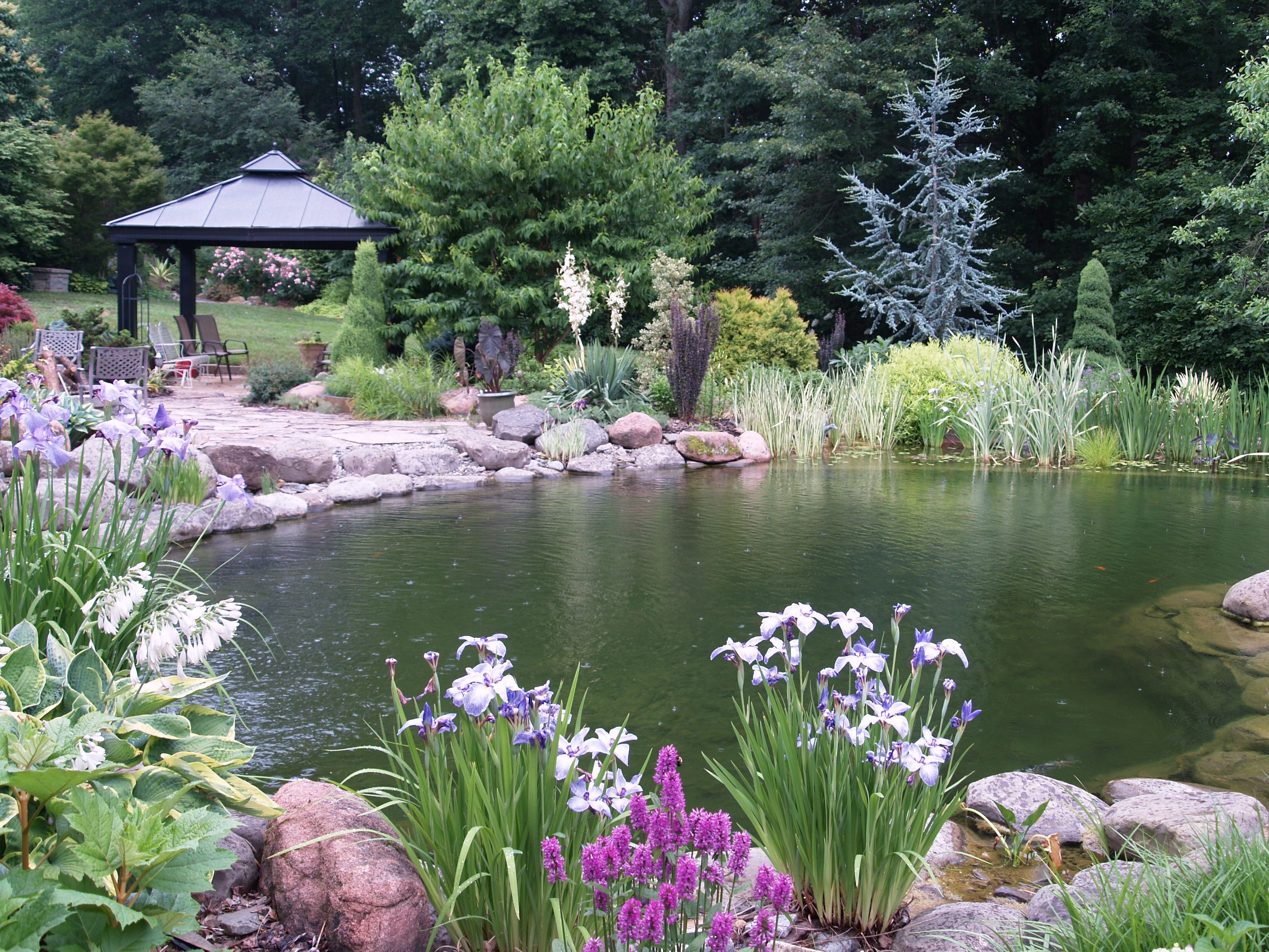 garden ponds are a delight ponds garden ponds and swimming ponds