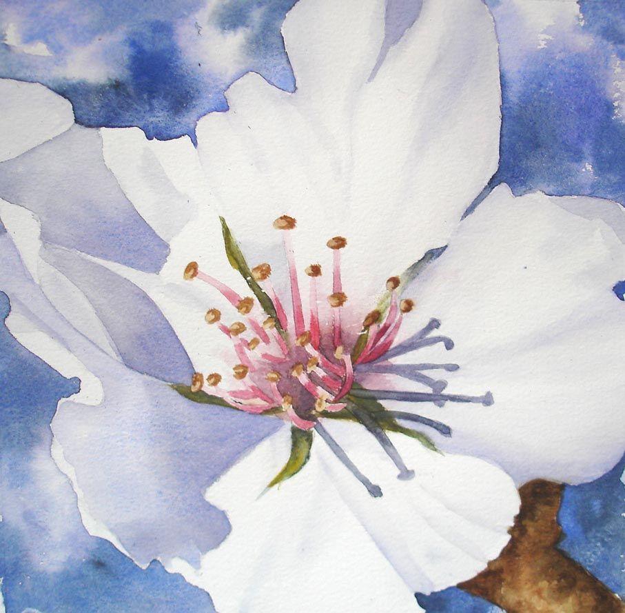Peinture l 39 aquarelle fleurs bouquets carnets de voyages for Pinterest aquarell