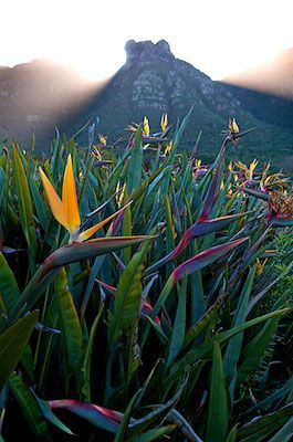 Bird of Paradise Plant: This image is a winner in the 2009 International Garden Photographers competition.