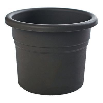 Bloem Posy Round Pot Planter Color: