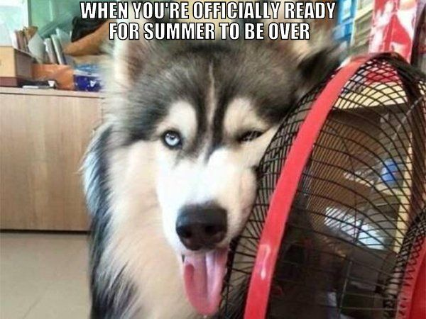 Meme Funny Husky Dogs : The best funny pictures of today's internet dog animal and funny