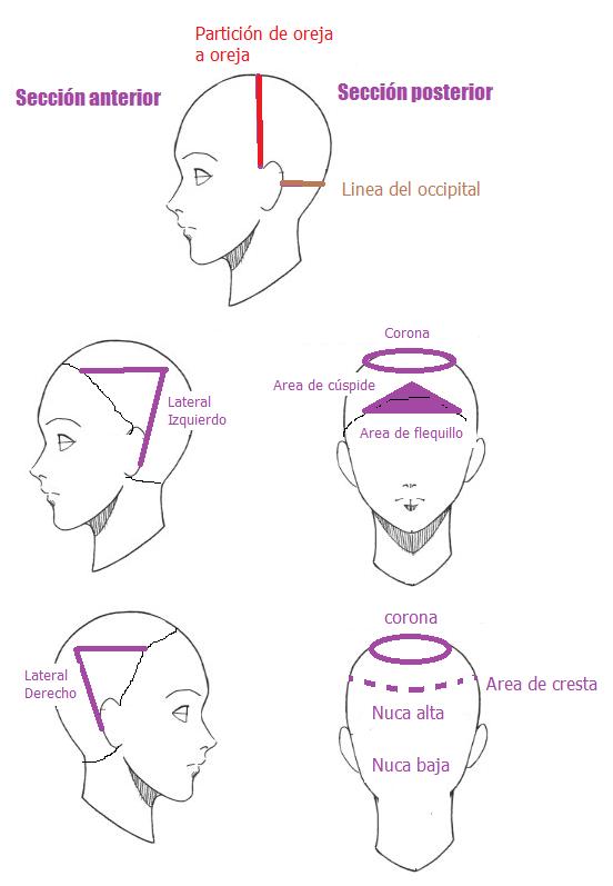 secciones de la cabeza corte de cabello | chic | Pinterest ...