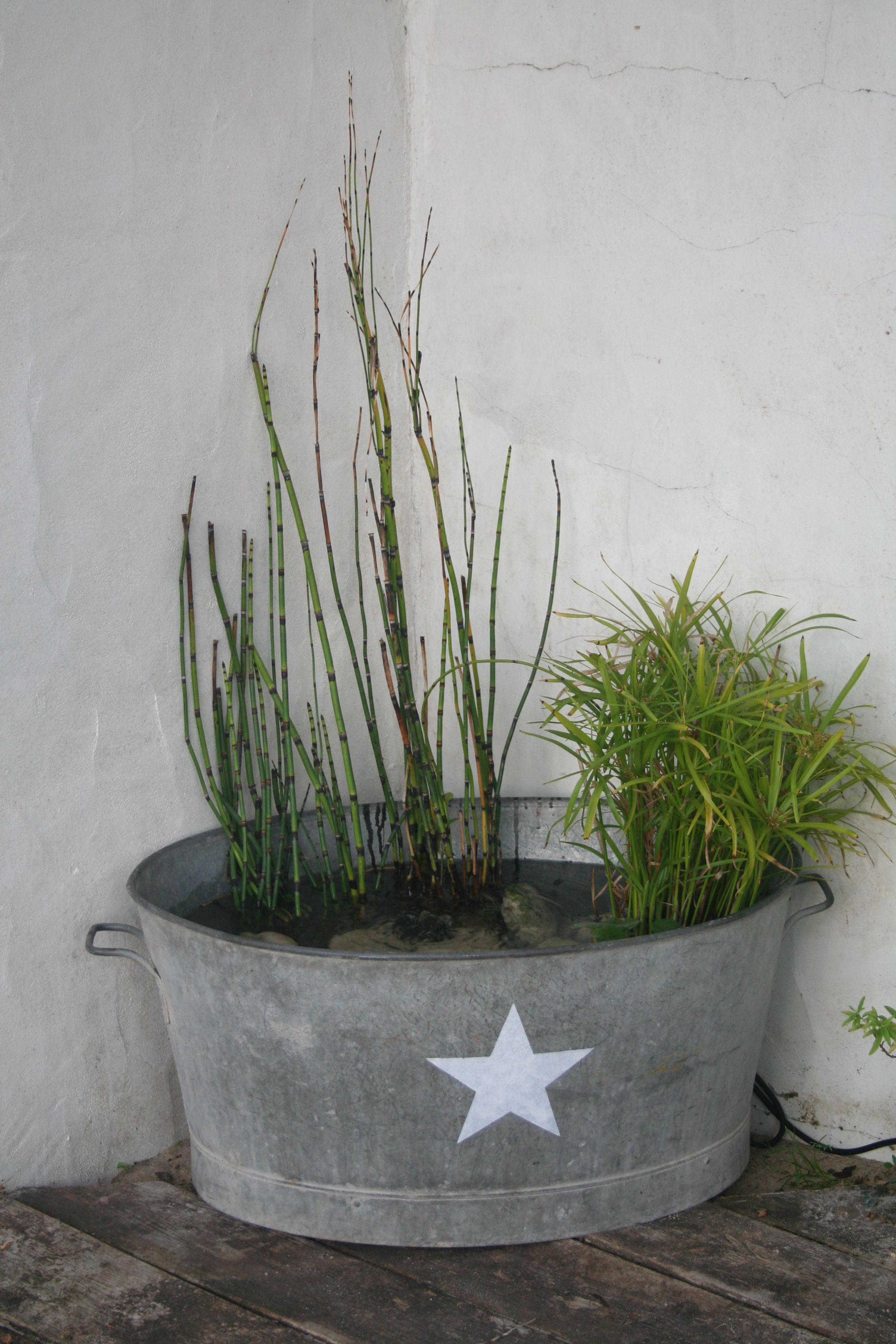 ma petite fontaine avec papyrus pr le et jacinthe d 39 eau