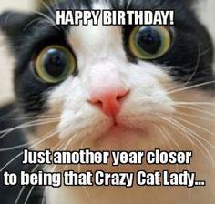 921ef42a5ce891e02d1766b5443dbe70 witty cat happy birthday meme 2happybirthday cats pinterest
