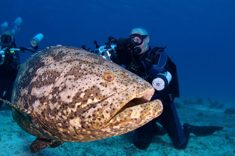 self proclaimed grouper capital of the world - 900×598