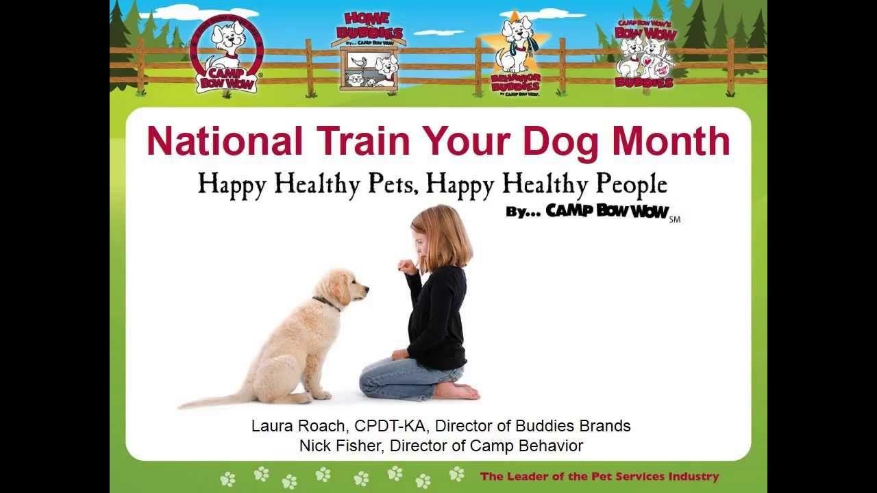 Did You Miss Camp Bow Wow S National Train Your Dog Month Webinar