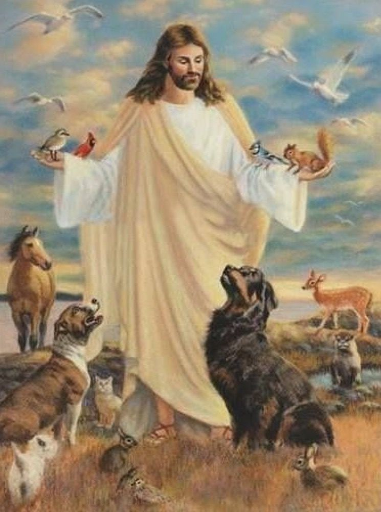 All Animals Go To Heaven Jesus Pictures Jesus Jesus Loves