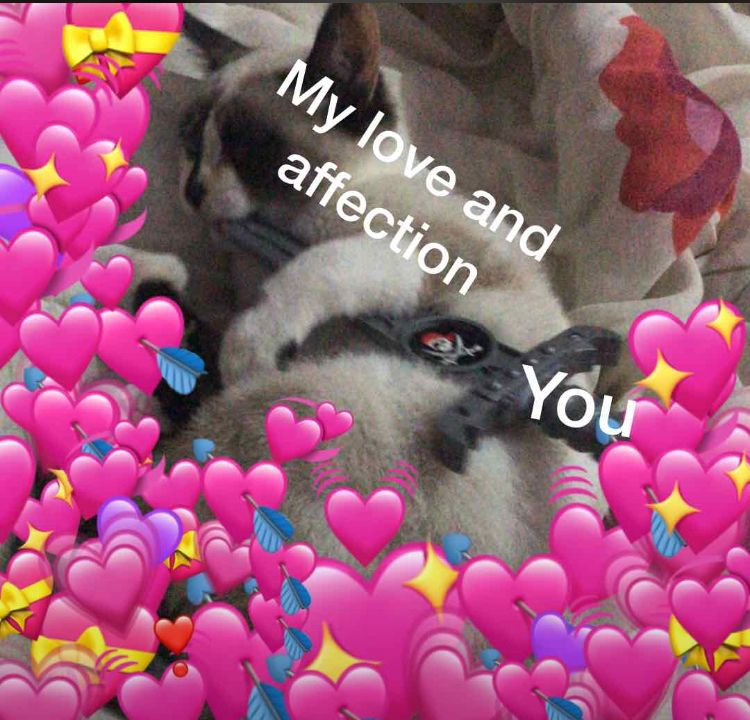 My Love And Affection Barbara Love Memes Love You Meme Hello My Love