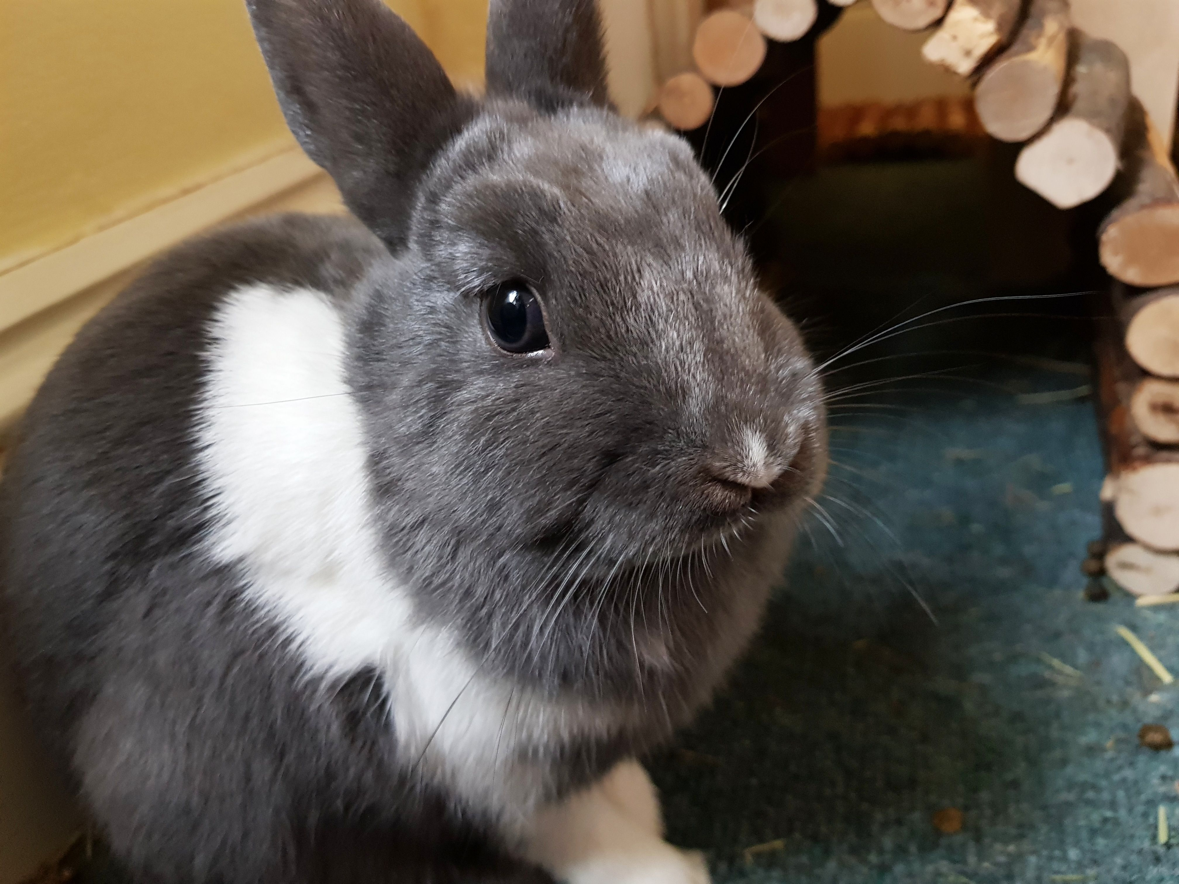 8 Things You Do That Upsets Your Bunny   Pet rabbit toys, Pet ...
