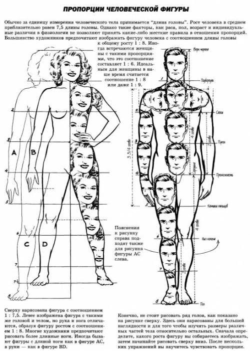 De ideale lichaamsverhouding van acht hoofden bij man en vrouw ...