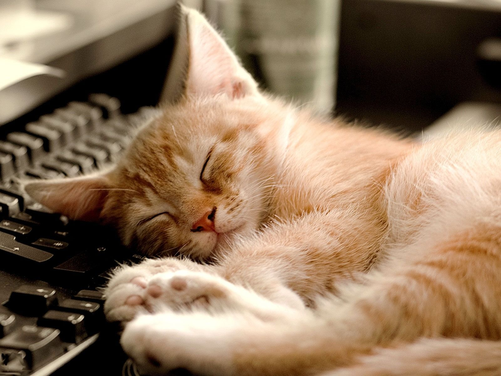 New Research Provides Insight as to Why Cats Sleep So Much