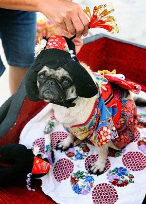 Pin By Dylan Bamford On Pets In Costumes Pinterest Pugs Dogs
