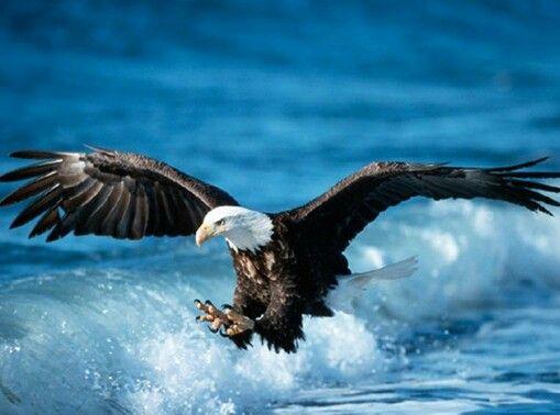 :)Aguila:)