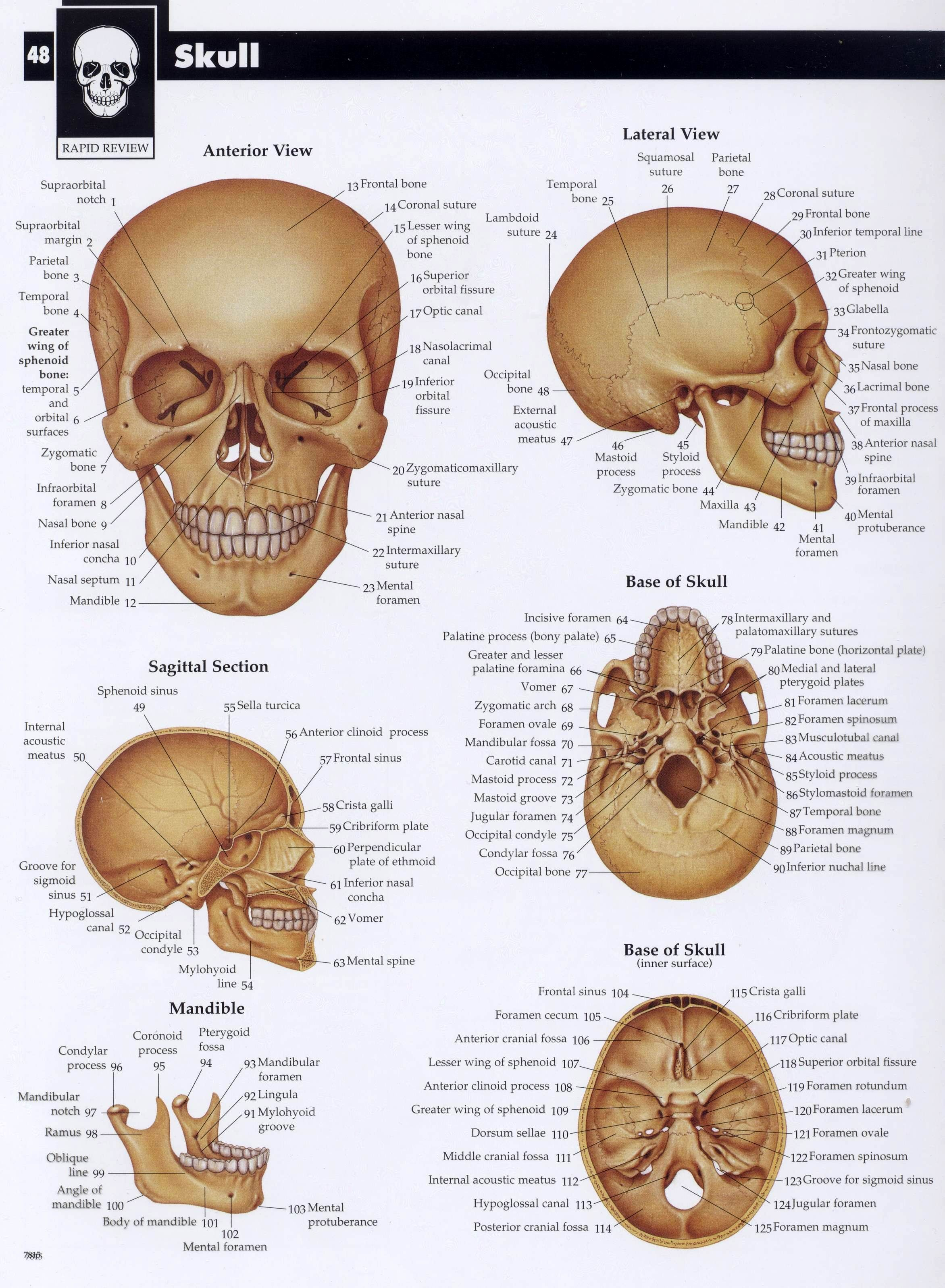 Pin by Michelle LeMieux on [] EDUCATION [] | Pinterest | Anatomy ...