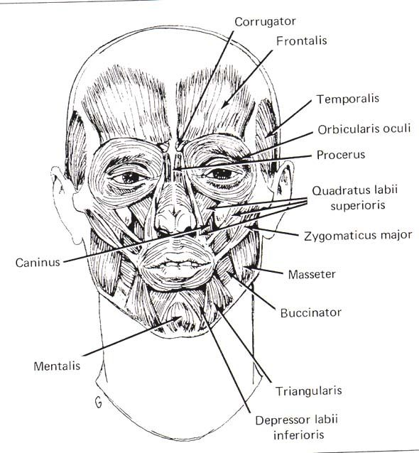 Human anatomy reference  Anatomy  Pinterest  Human faces