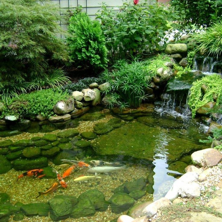 how to build a koi pond with concrete