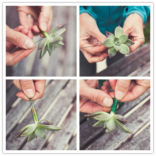 Do it yourself project desert bloom boutonniere succulent do it yourself project desert bloom boutonniere solutioingenieria Image collections