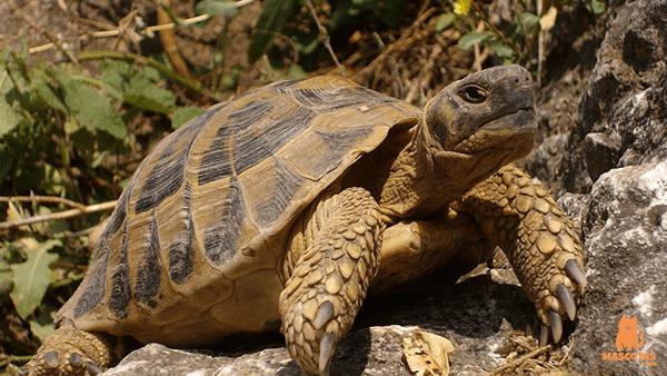 Resultado de imagen de tortuga tierra