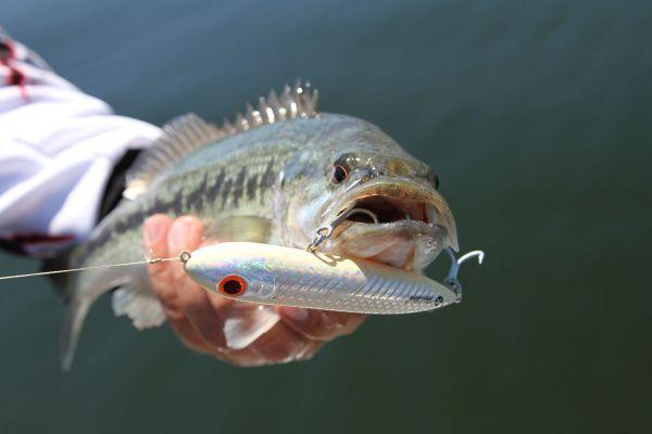 die besten 17 ideen zu topwater lures auf pinterest | bass fishing, Hard Baits