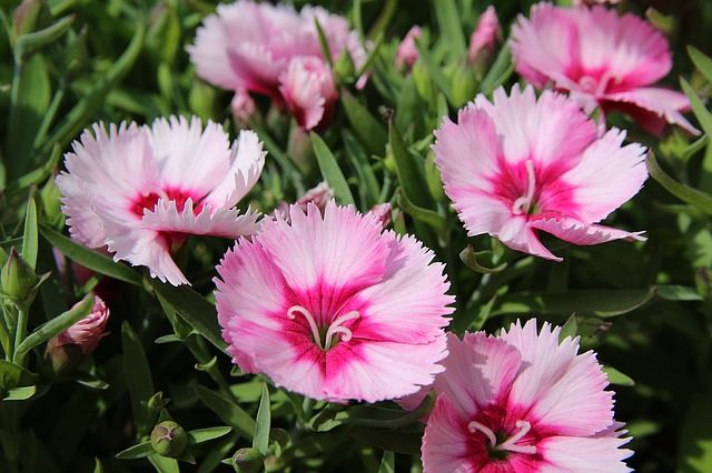 Top 10 perennial flowers to grow from seed perennials gardens and top 10 perennial flowers to grow from seed mightylinksfo