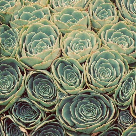 Sea of Succulents - 5x5 Fine Art Photograph.