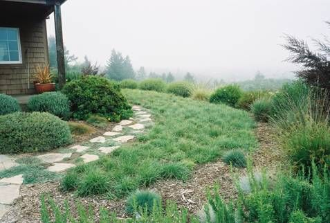 Carex Pansa Among The Most Popular Sedges For Creating An