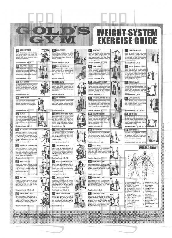 gold gym exercise chart pdf - Danada