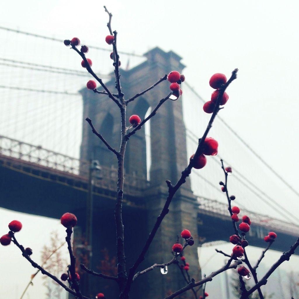 brooklyn bridge berries - nyc photography - kat irilin