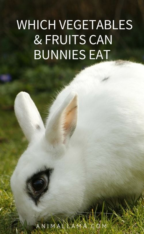 Can Bunnies Eat Vegetables & Fruits Such as Apples, Grapes