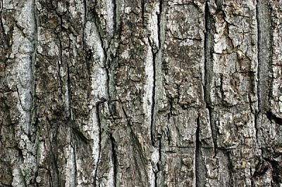 Rough Tree Bark