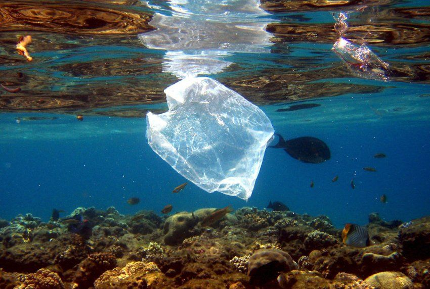Plastik Fressende Bakterien