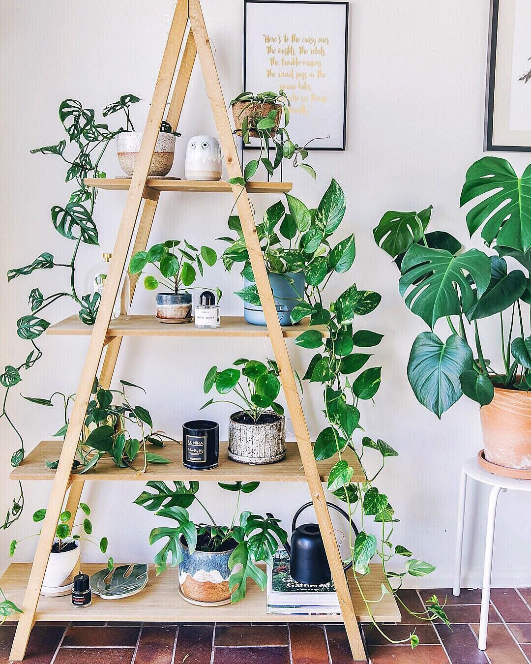 11k Likes, 98 Comments House Plant Club