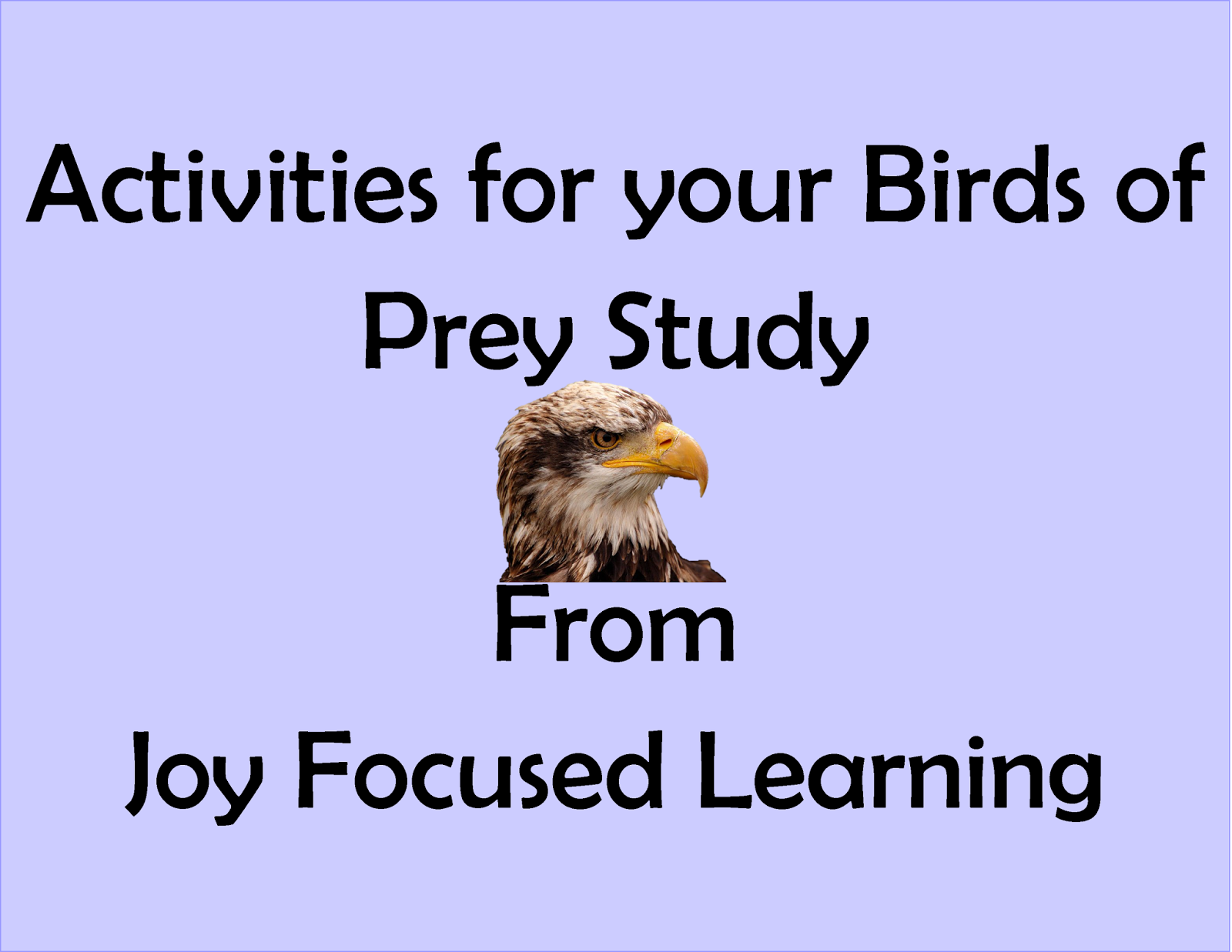 Joy Focused Learning Extra Activities For The Birds Of