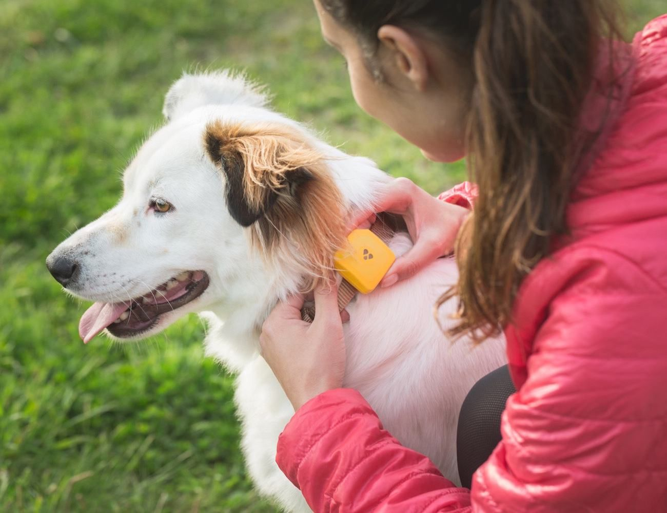 Findster Duo The 1st Gps Pet Tracker Free Of Monthly Fees Pet Tracker Best Gps Tracker Pet Gps