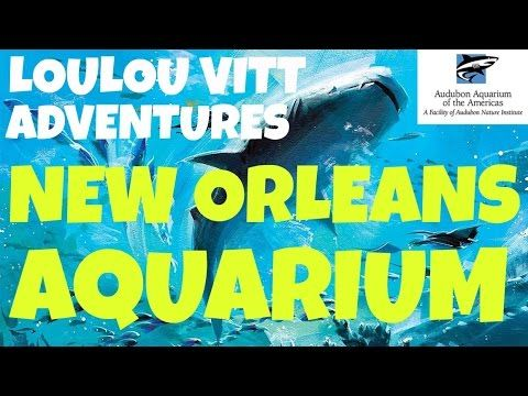 TRAVEL ADVENTURE to the Aquarium of the Americas in New Orleans! COME WITH US! - YouTube