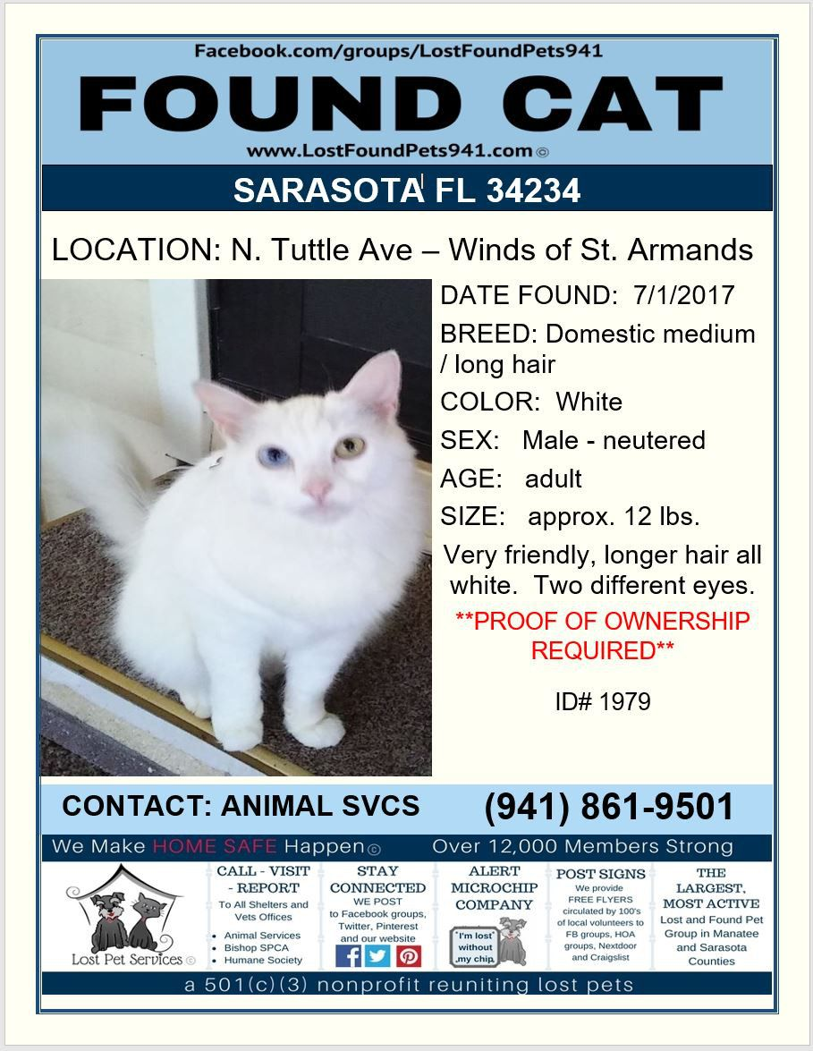 Do You Know Me Found Cat Missing Pets Longhair Sarasota Fl 34234 Lostfoundpets941 Losing A Pet Service Animal Found Cat