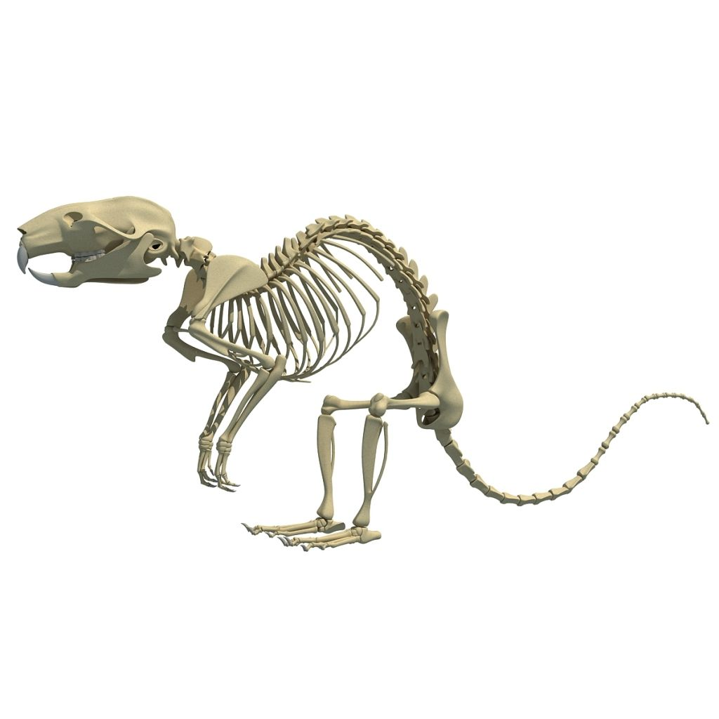 Rat Skeleton 3d Character 3d Character Rats And Skeletons